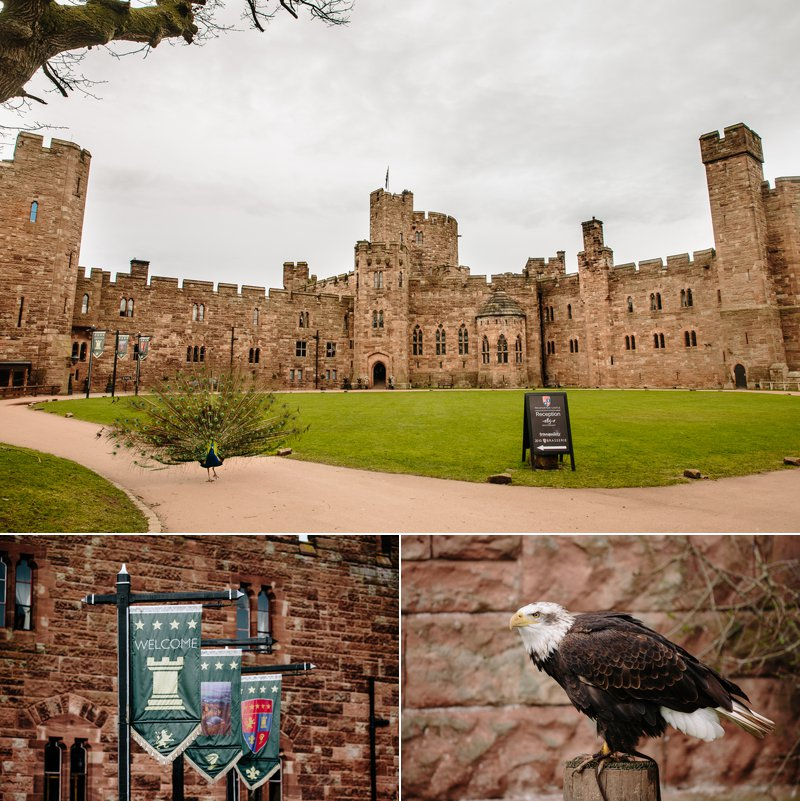 Peckforton Castle grounds and birds of prey