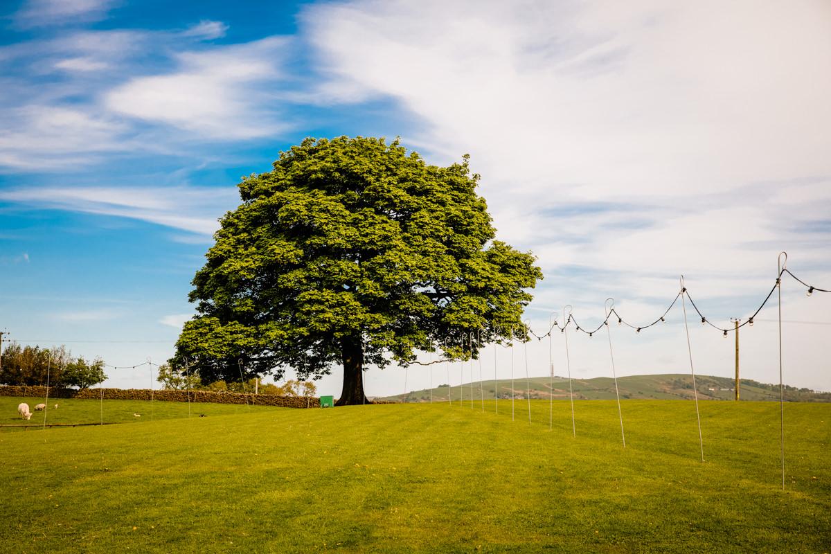 The famous Sycamore tree at Heaton House Farm