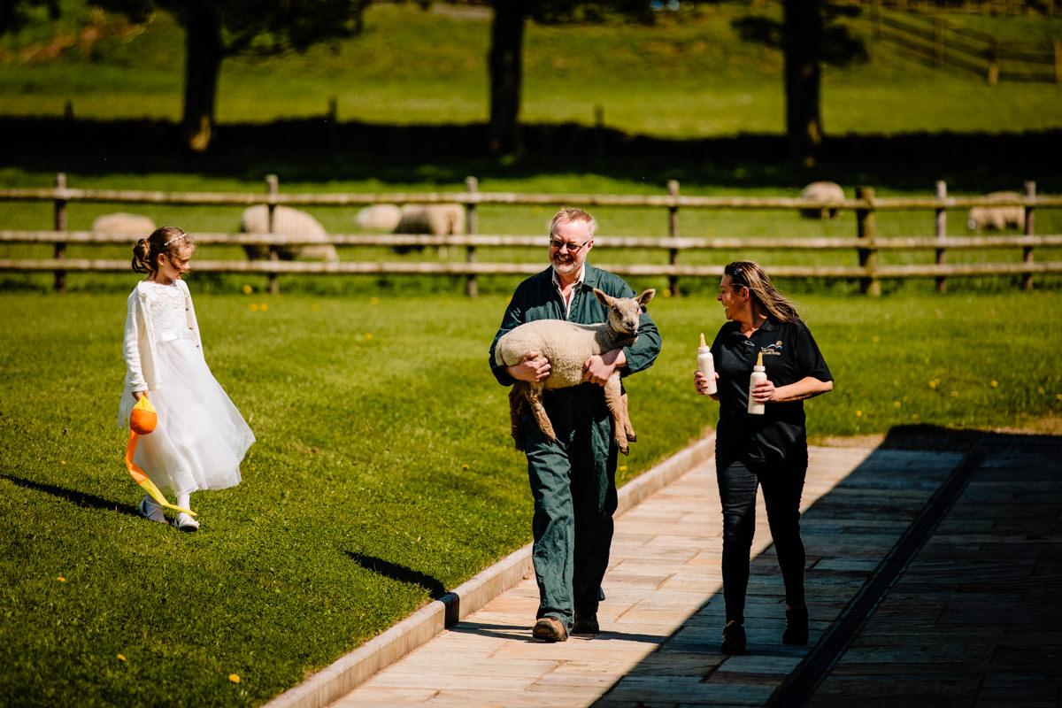 Lambs at Heaton House Farm