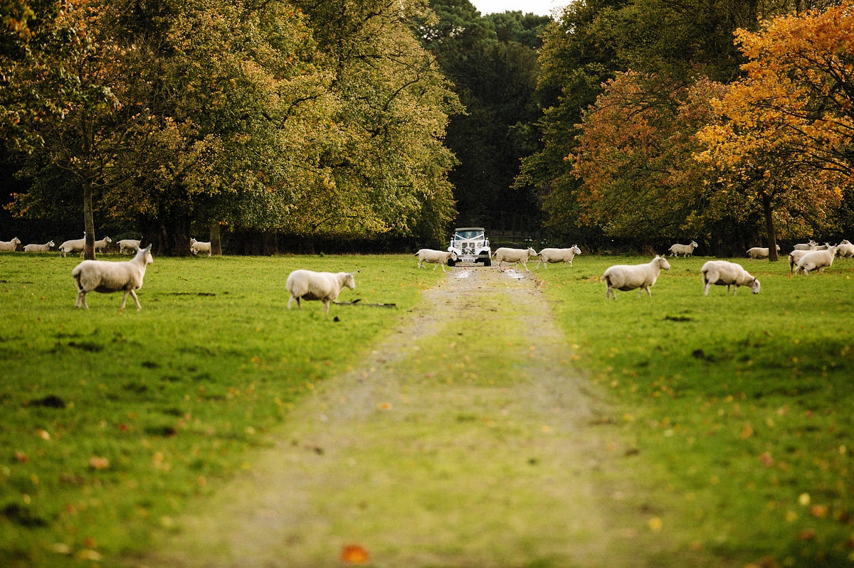 Wedding car arriving at Arley Hall past the sheep in the field